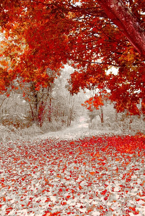 Autumn leaves fall onto early snowfall. Somewhere in America.